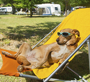 Dog enjoying some sun at Yuma Lakes Resort
